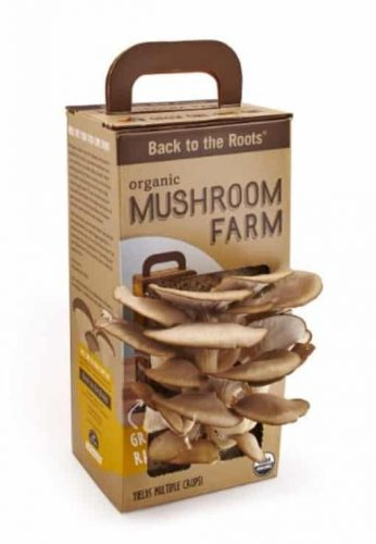 gift ideas for parents who have everything | organic mushroom farm