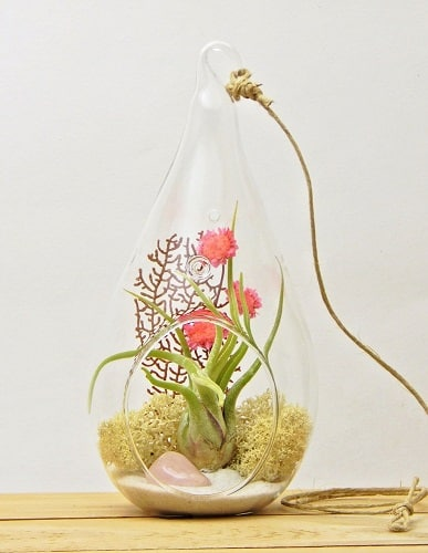 Countryside Style Air Plant