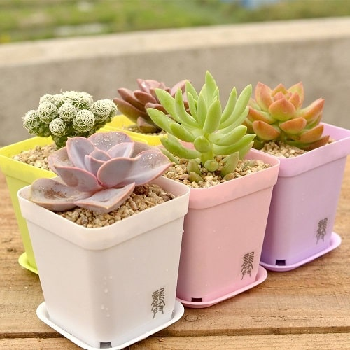 Succulents in Modern Candy Color Planters