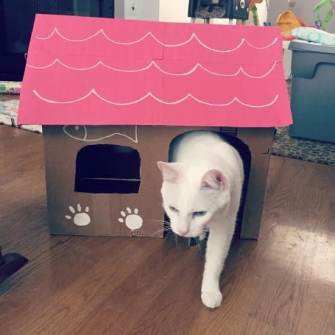 DIY cat house made with recyclable materials