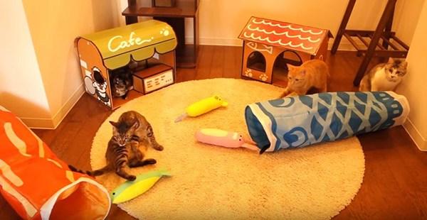 DIY Cat Props
