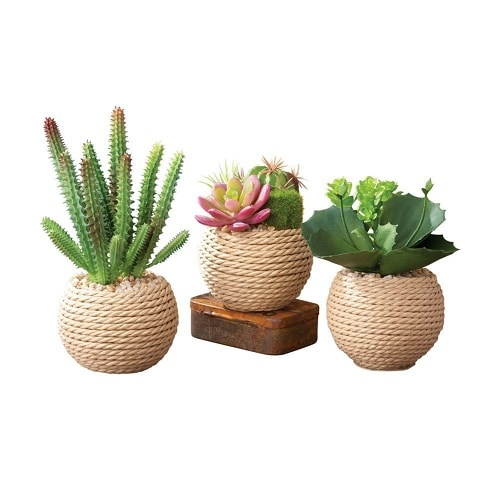 Potted Succulents Set- Dorm Room Decor