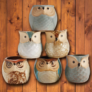 Adorable owl planter pot