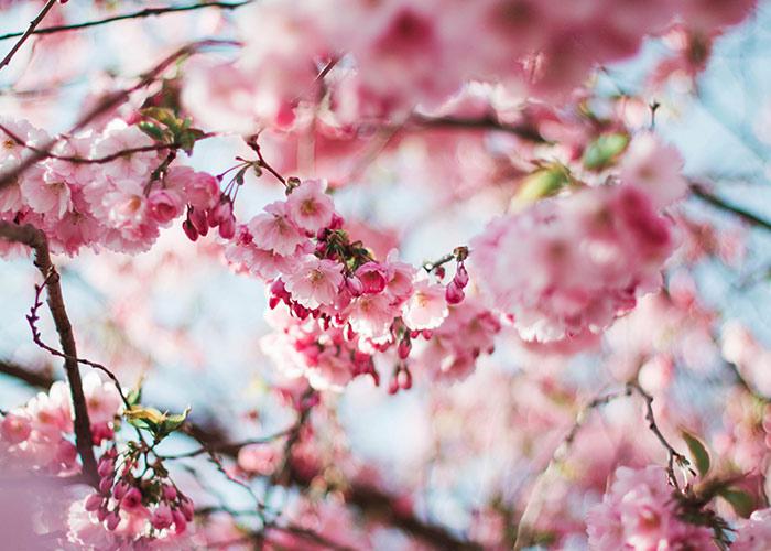 cheap spring date ideas