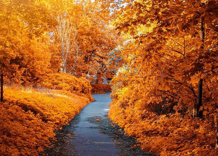 cheap fall date ideas